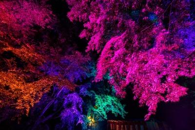 """【写真を見る】広大な敷地が光のプログラムによって""""極彩色""""の世界に包まれ、ひと味違う紅葉狩りが楽しめる"""
