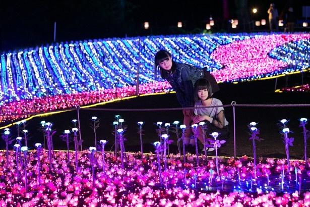 幻想的に花の色が変化していく「光のチューリップ畑」