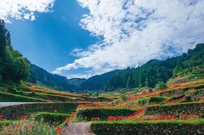 美しい弧を描く棚田とそのあぜを彩る真っ赤な彼岸花、青空のコントラストが美しい。棚田がある新川田篭地区は、重要伝統的建造物群保存地区にも認定されている