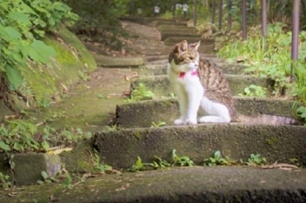 今月のおひつじ座さんは、階段の上り下りでムリしないで!