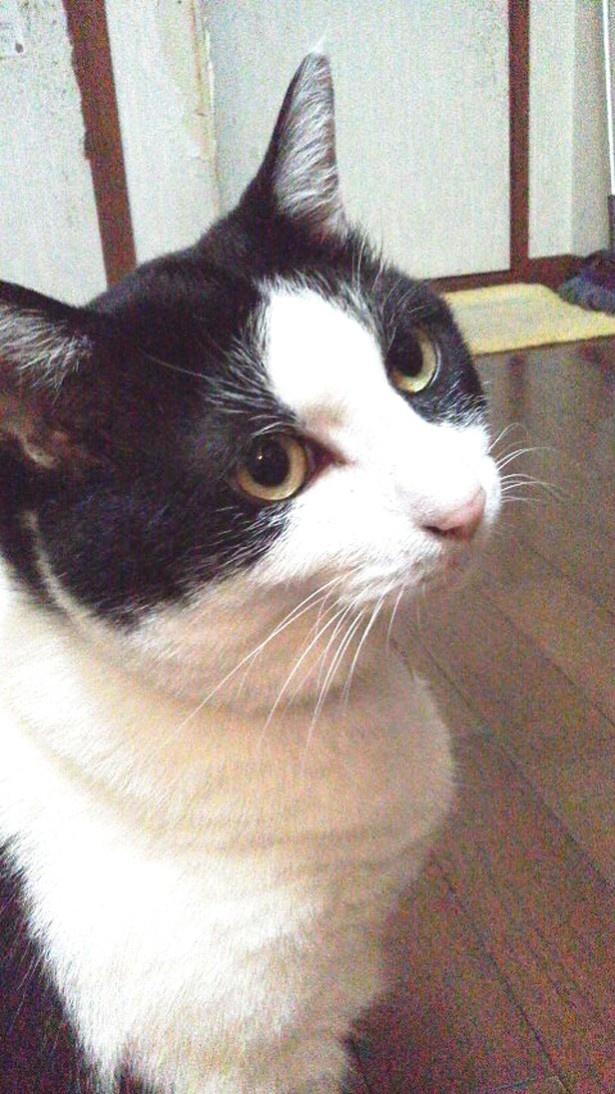 実はロマンチストな、猫☆占ニャい師マドモアゼルにゃーこ先生