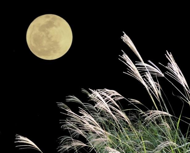 【写真を見る】10月16日の満月の夜は、うお座猫さんのラブ運が高まる日