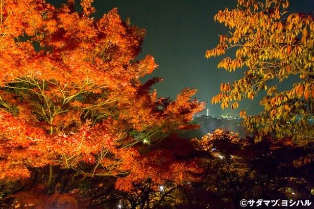 轟門(工事中)の手前から仁王門方面へ振り返ると、紅葉の間から京都タワーを見渡せる絶景が望める