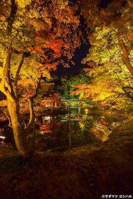中門東側から臥龍池を見ると、ライトアップされた紅葉や臥龍廊が池に映り込む、幻想的な光景が楽しめる