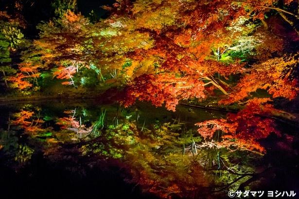 紅葉で周囲を埋め尽くされる臥龍池は、ライトアップされた紅葉を水面が映し出す絶景ポイント