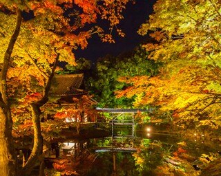 高台寺の紅葉ライトアップを楽しむベストコースはこれ!