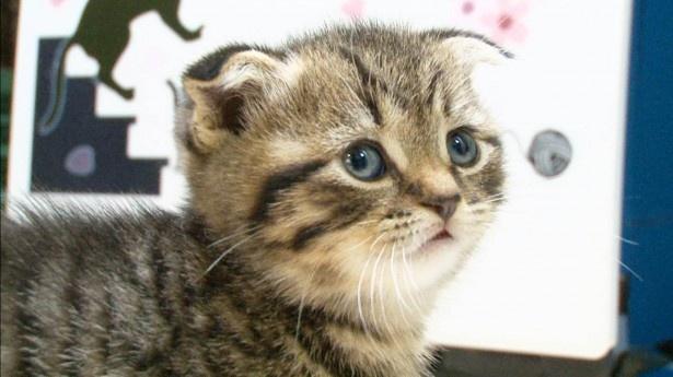 【写真を見る】愛くるしい顔の子猫たちは見逃し厳禁!