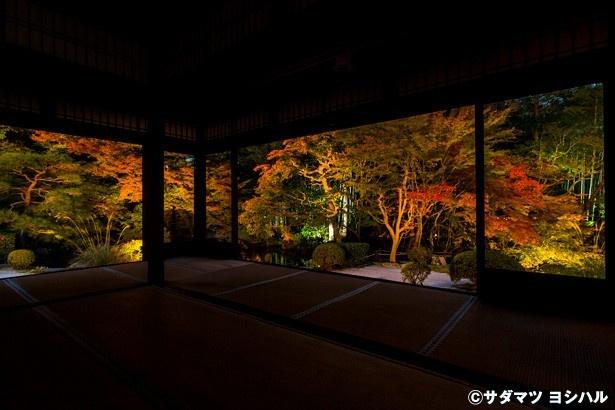 書院南側には、紅葉と竹林との見事なグラデーションが楽しめる枯山水庭園が