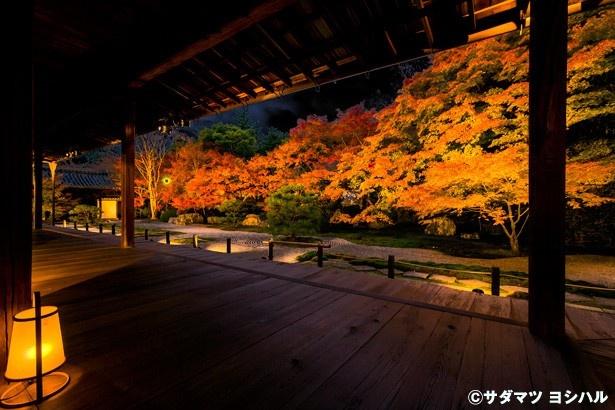 普段入ることができない本堂の中からは、池泉回遊式庭園が眺められる