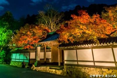 【写真を見る】門前の石垣や白壁に浮かぶ紅葉は、和情緒あふれる光景を演出!