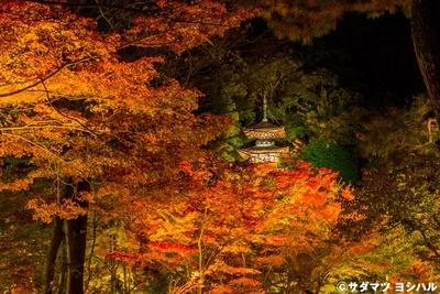ライトアップによって浮かび上がった多宝塔と紅葉は、幻想的な雰囲気に