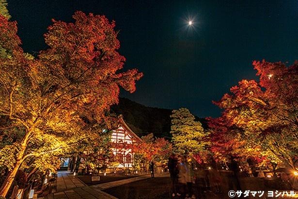 【写真を見る】中門をくぐりしばらく歩くと、諸堂入口となる大玄関前付近の見事な紅葉が迎えてくれる