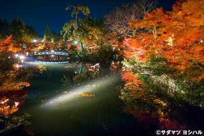 極楽橋の上に立って放生池の中心を眺めると、燃えるような紅葉や池の中心に立つ弁天社を望める