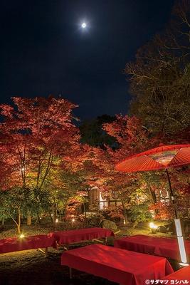 美しい日本庭園を眺めながら、みたらし団子やお茶で一服できる茶屋