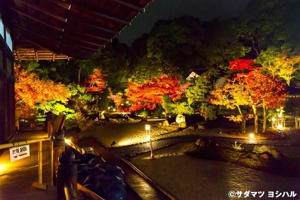 【写真を見る】白砂の白と杉苔の緑、紅葉の赤のコントラストが素晴らしい紫雲の庭