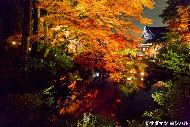 池をぐるりと一周できる紫雲の庭。池の奥から大方丈方面を眺めれば、池に映る紅葉と建築物の和情緒豊かな光景が