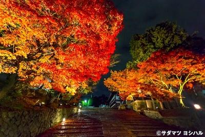 山門と大方丈の間にある石畳の参道でも、ロマンチックなライトアップが見られる