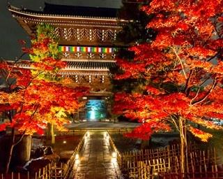 金戒光明寺の紅葉ライトアップを楽しむベストコースはこれ!
