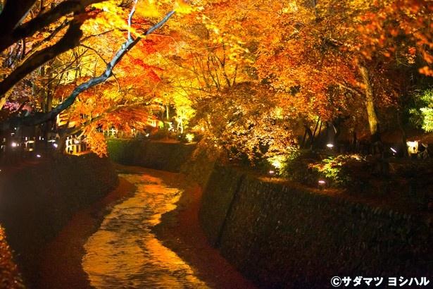 紙屋川の上を包み込むかのように、両岸から光に照らされた紅葉が広がるもみじ苑