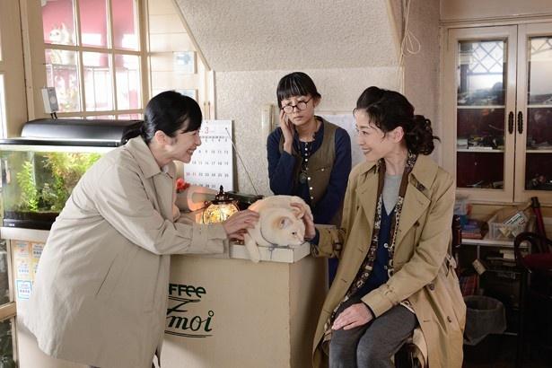 劇中では看板猫・みっちゃんが登場するが、実際のお店では看板犬・モモちゃんがお出迎え(「シェモア」)