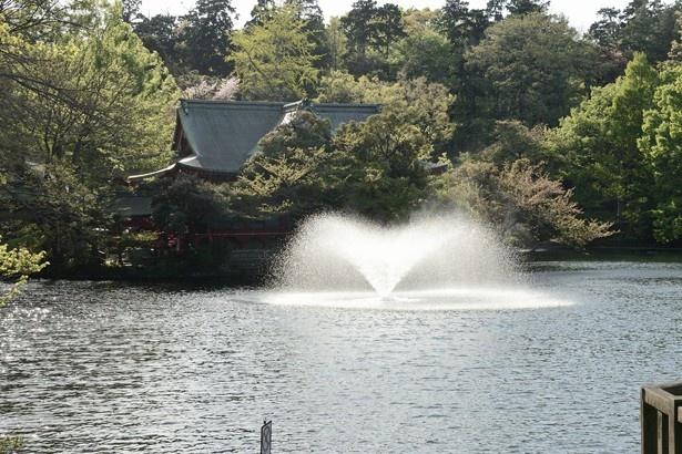池の中の噴水。奥にあるのは「吉祥寺 井の頭公園 弁財天」(「井の頭恩賜公園」)