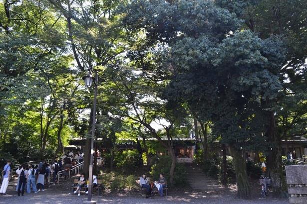 木々に囲まれた、まさに森の中。休日はオープン前から行列ができるほど大盛況(「ペパカフェフォレスト」)