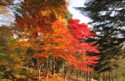 【写真を見る】鮮やか過ぎる!六甲高山植物園の紅葉