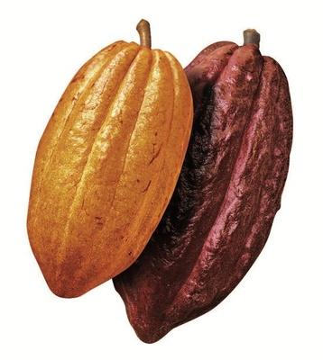 「ガーナ産」と「エクアドル産」のカカオ豆を使用