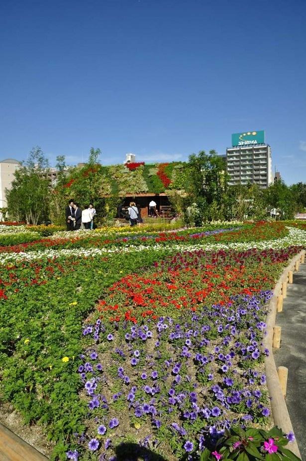 花畑の向こうに見える小屋は「花咲く丸太小屋」。屋根にまで色とりどりの花が咲いて、おとぎ話の世界のよう