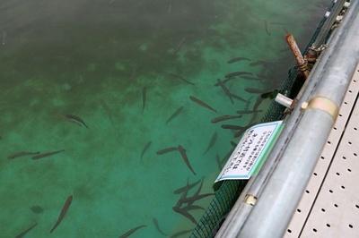 としまえんフィッシングエリアは手軽に釣りを楽しみたい人にピッタリ