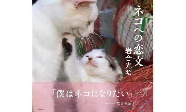 『ネコへの恋文』(岩合光昭/日経BP社)