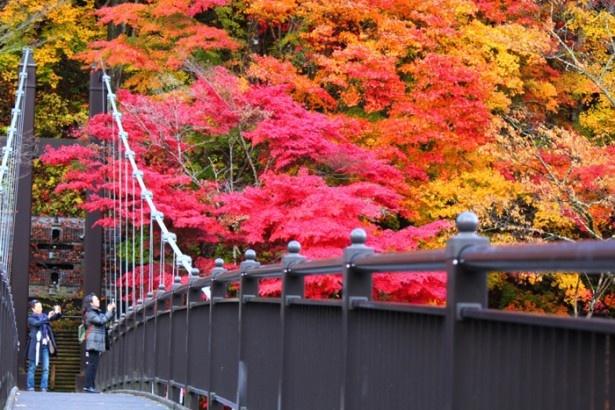 2位の塩原・矢坂・大田原・西那須野エリア。「塩原虹の吊橋」の紅葉は必見