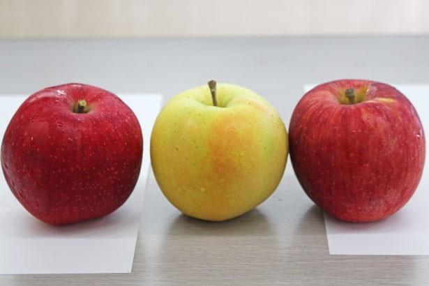 【写真を見る】3品種を食べ比べ!写真左から「彩香」「トキ」「つがる」