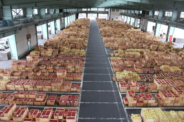 弘果弘前中央青果の第3卸売場に並ぶ、おびただしい数のリンゴ