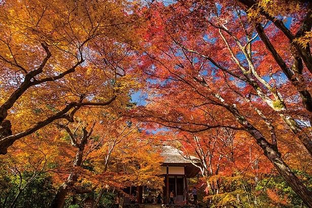 【写真を見る】仁王門から石段へと、深紅のカエデが広がる景色は圧巻。歌仙祠からの眺めも必見/常寂光時