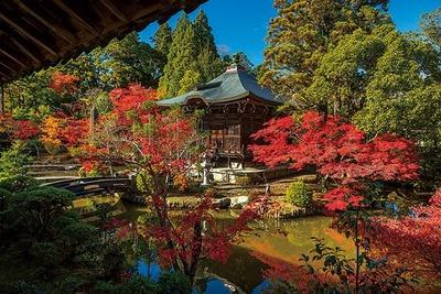 方丈庭園の弁天堂は、周囲の緑と紅葉のコントラストが素晴らしい。和情緒豊かな景色をぜひ/清凉寺