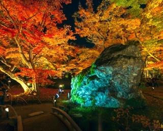 モミジ色に染まる名庭!天龍寺塔頭 宝厳院の紅葉ライトアップ
