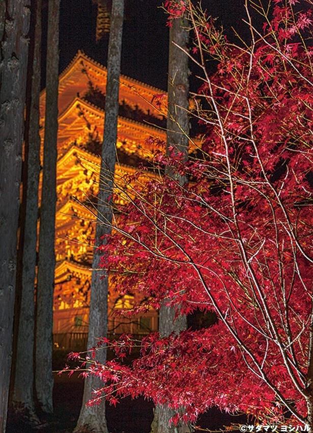 【写真を見る】京都府下で最も古い木造建築物の五重塔もみどころ