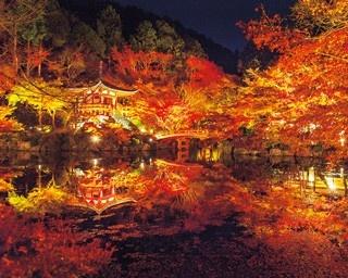 五重塔をバックに楽しむ!世界文化遺産・醍醐寺の紅葉ライトアップ