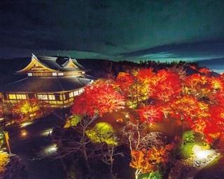 京都の夜景も一望!将軍塚青龍殿の紅葉ライトアップ