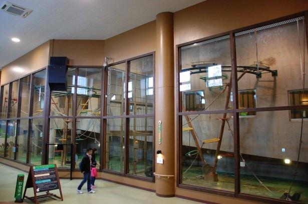 ちんぱんじー館はガラス1枚で仕切られた施設。ちんぱんじーの行動が丸ごと観察できます