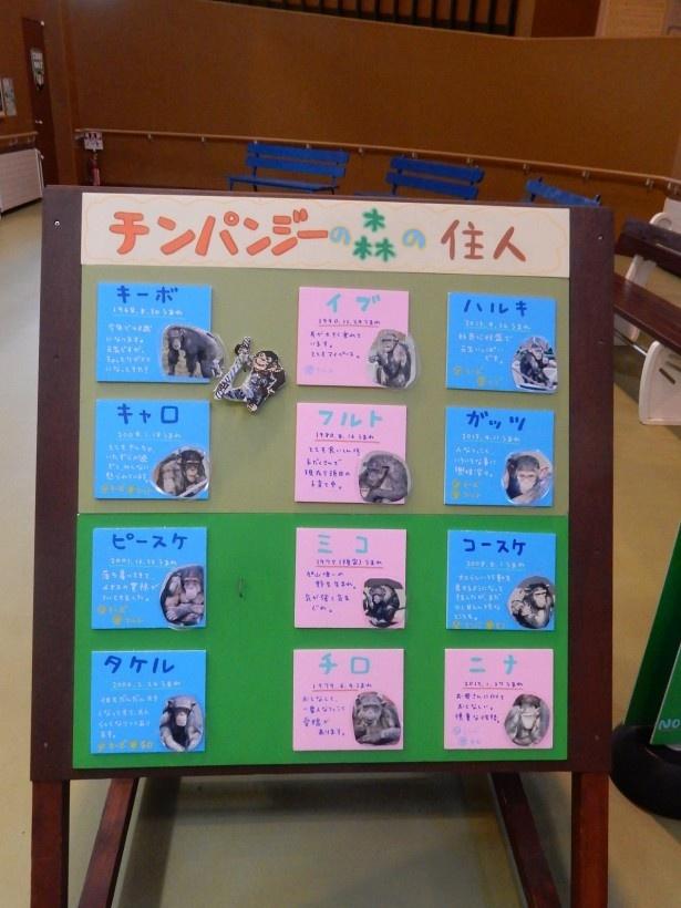 旭山動物園・ちんぱんじー館の個体展示パネル