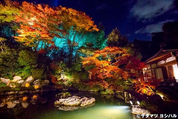 鮮やかな竹林をバックに、龍心池の周囲にある紅葉が眺められる華頂殿。幽玄の景色は時を忘れるほどの美しさ