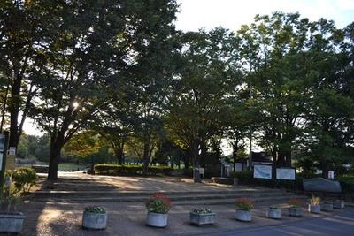 市民の憩いの場となっている、市内最大の都市公園「清瀬金山緑地公園」