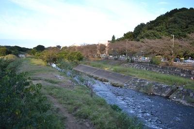 サクラの名所にもなっている「柳瀬川」