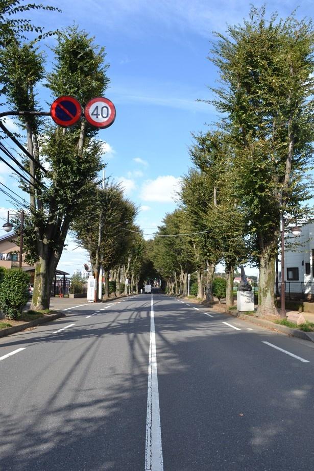 清瀬市のシンボルロードとして親しまれる「けやき通り」。通り沿いにはさまざまな彫刻作品が飾られている
