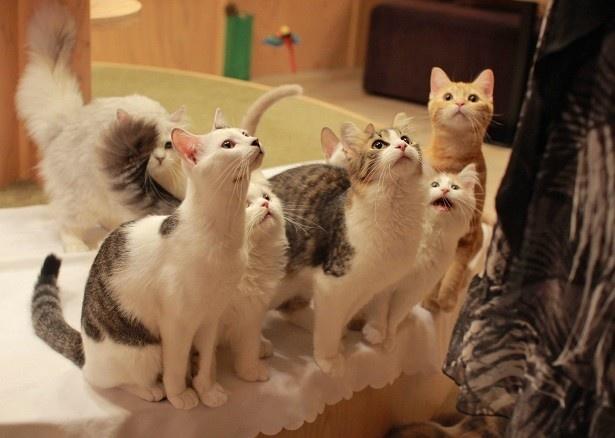 約20匹の猫が在籍