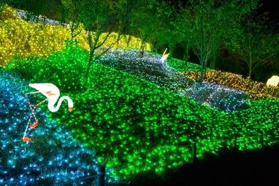 「光の動物園」にはイルミネーションで形作られた動物たちの姿も