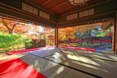 【写真を見る】茶席「無畏庵」では、美しい紅葉を眺めながらゆったりとお茶を楽しめる