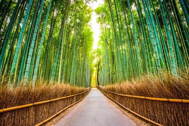 """天龍寺の北側から約300mに渡って続く""""竹林の道"""""""